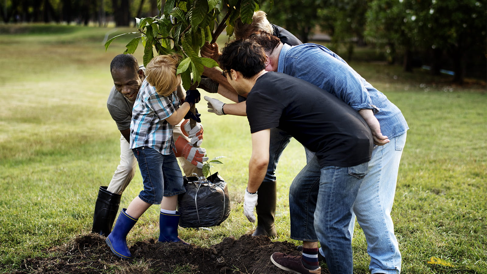 Group planting tree